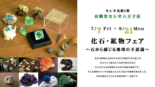 化石・鉱物フェア~石から感じる地球の不思議~