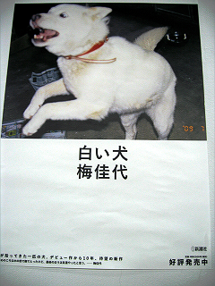 梅佳代「白い犬」ミニパネル展